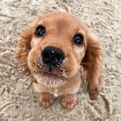 Things that make you go AWW! Like puppies, bunnies, babies, and so on. A place for really cute pictures and videos! Cute Baby Dogs, Super Cute Puppies, Baby Animals Super Cute, Cute Little Puppies, Cute Dogs And Puppies, Cute Little Animals, Cute Funny Animals, Doggies, Baby Pets