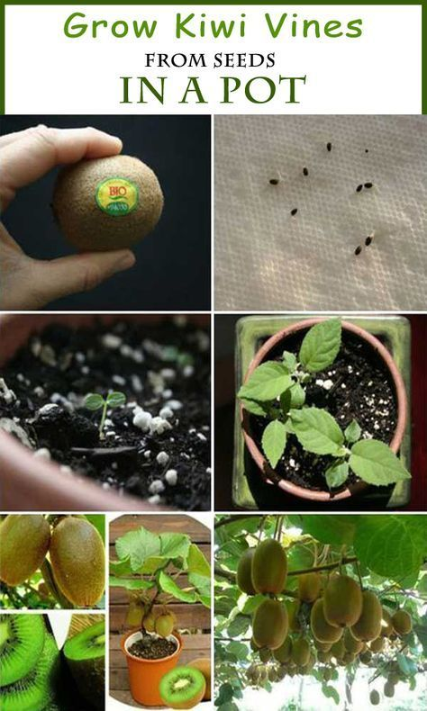 5 Best Citrus Trees For Containers Growing Citrus In Pots Citrus Trees Bonsai Fruit Tree Growing Citrus