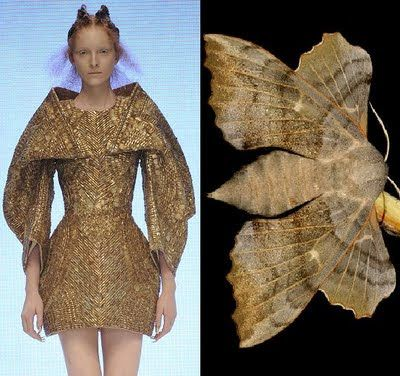 THE INSPIRATION BEHIND ALEXANDER MCQUEEN SPRING 2010 are Moths | Tiny Sparkly Things
