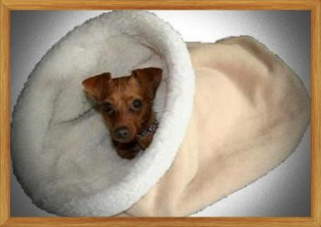 Ultimate Dog Bed Cave Dog Bed Cozy Cave Dog Bed Cheap Dog Beds