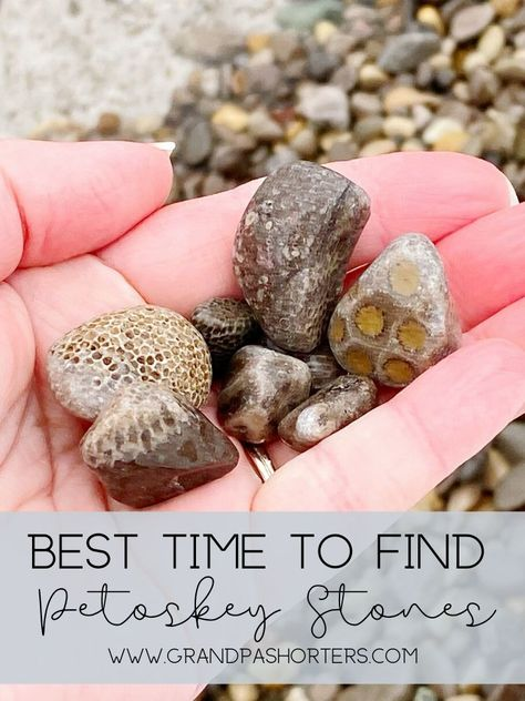If you plan on visiting Northern Michigan you'll want to know when is the best time to find Petoskey stones. Petoskey Michigan, Lake Michigan, Wisconsin, Michigan Vacations, Michigan Travel, Most Haunted, Haunted Places, Petoskey Stone, Rock Hunting
