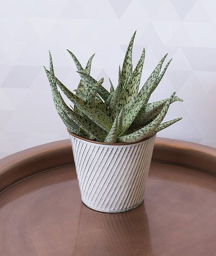 14 Hardy Houseplants That Will Survive The Winter 640 x 480