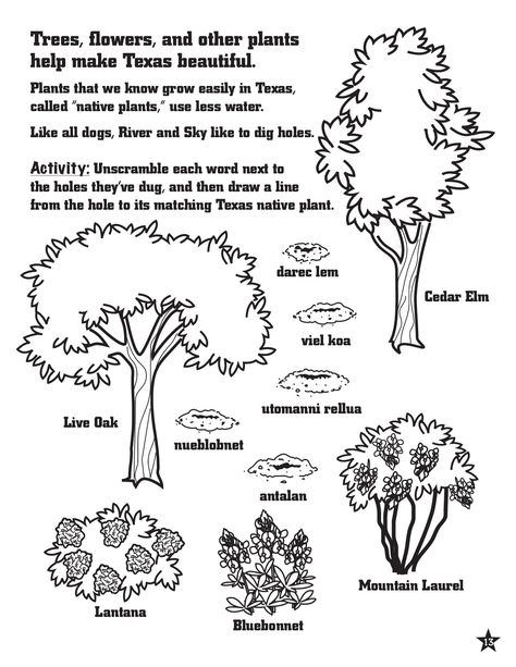 Texas Native Plant Activity And Coloring Page For Kids