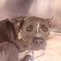Please Please Adopt 3 Animal Welfare Quote Pets Dog Adoption