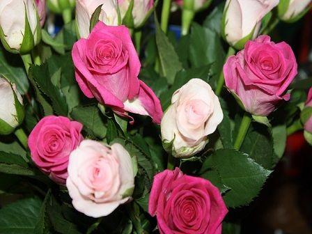 Valentinstagsgruß Schönen Valentinstag Ihr Lieben U003c3 #valentinstag  #valentinsgruß #rosen | Dies Und Das | Pinterest