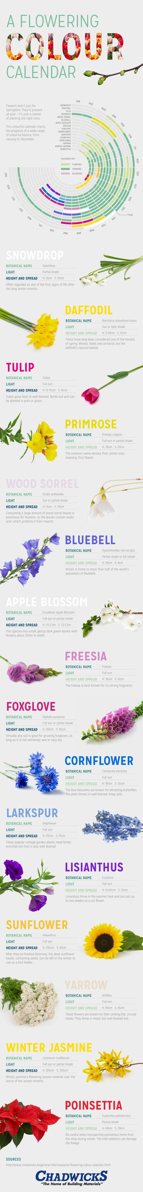 A Flowering Colour Calendar #infographic #Flowers #Gardening