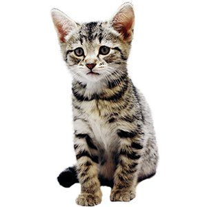 Image Result For Kittens With Images Kittens Alley Cat Allies Cat Photo
