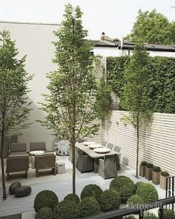 c459531cbe593ed2005288be8fcb416a - Tall Skinny Trees For Small Gardens