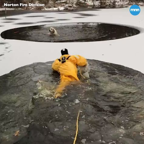 Watch as a dog is rescued from ice and freezing waters in Norton, Ohio.