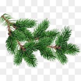 Tree Clipart Christmas Trees Christmas Tree Branches Tree Fir Clipart Tree Clipart Fir Christmas Tree Background Christmas Tree Branches Christmas Tree Clipart