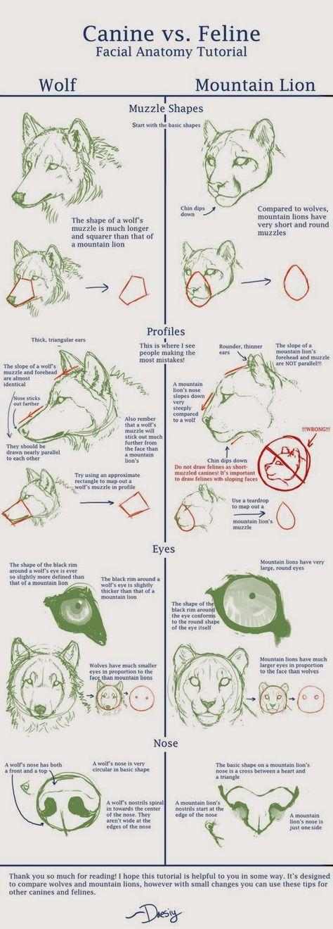 Wolf Anatomy - Part 3 by *Autlaw on deviantART: | How to | Pinterest ...