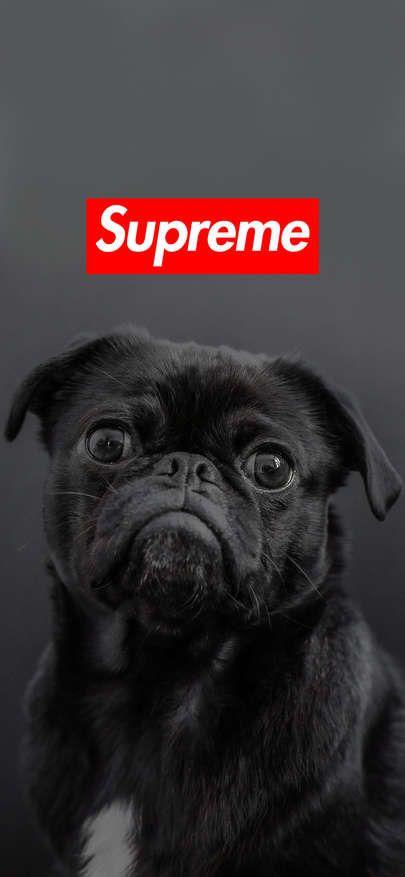 Free Download Wallpaper Iphone Xs Xr Xs Max Supreme Wallpaper