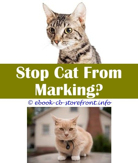 4 Healthy Tips What Removes Cat Spray Odor My Cat Is Spraying All