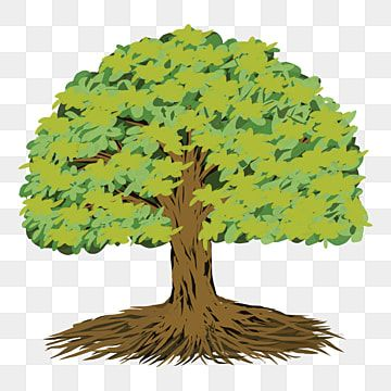 Find Hd Realistic Tree Png Image Background Trees For Rendering In Photoshop Transparent Png To Search And Download Tree Photoshop Tree Render Tree Drawing