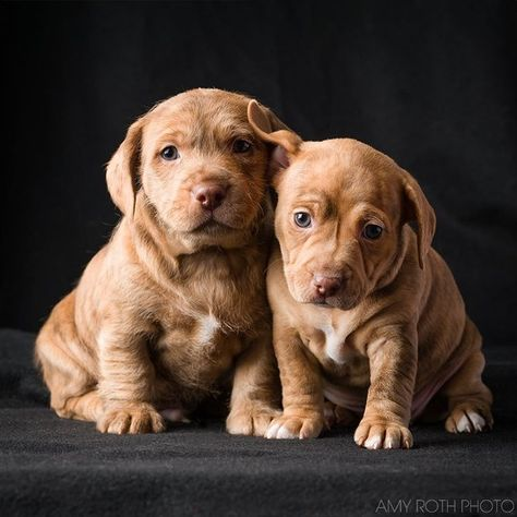 Puppy Love, Dachshund & Pitbull Puppies Picture, Dog Photo Print, Rescue Animal Photography, Dog Photography, Nursery Decor, Animal Shelter