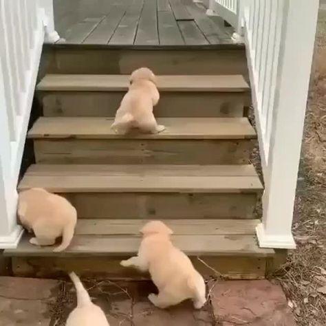 """Gefällt 2,119 Mal, 18 Kommentare - Labrador Lovers 🐾 (@labrador_mob) auf Instagram: """"Puppies exploring 😊😄 -⠀ 👫 Tag a friend⠀ 👉 Follow @labrador_mob⠀ 👉 #labrador_mob to be…"""""""