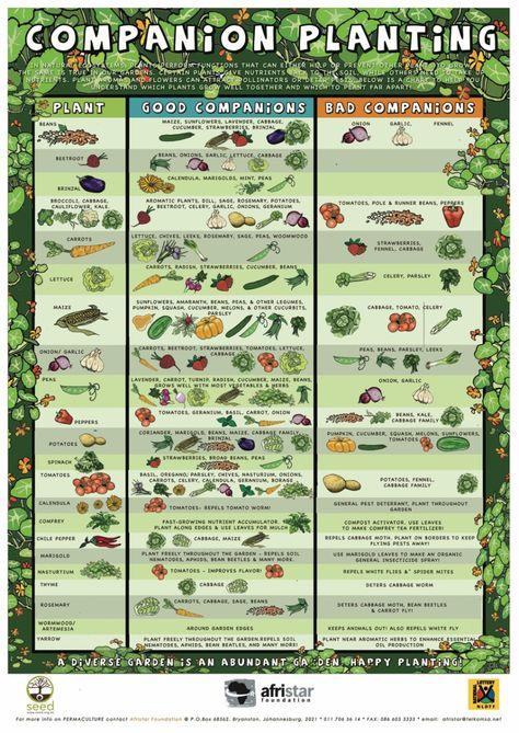 Companion-Planting table