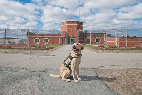 Colorado Cell Dogs Adopt A Dog That Is Already Trained Dog