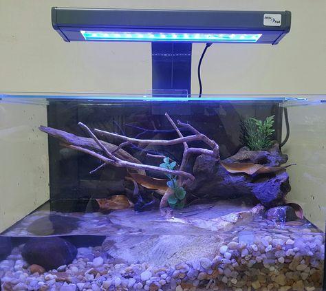 Mudskipper tank