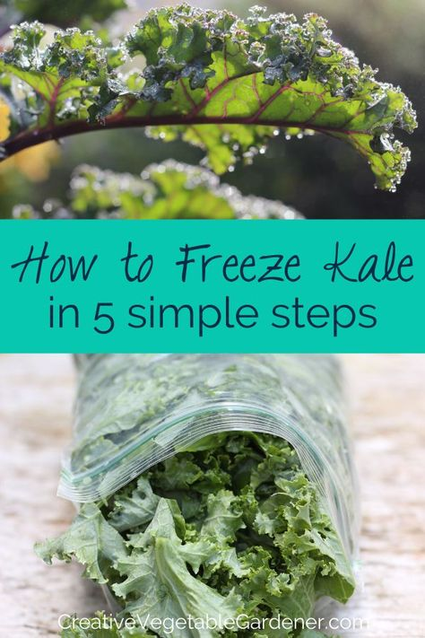 Contemporary Garden Design Kale is one of the easiest vegetables to preserve for use in favorite winter recipes. There's virtually no prep involved and you can freeze kale raw! Freezing Fruit, Freezing Vegetables, Fruits And Veggies, Jambalaya, Kale Recipes, Healthy Recipes, Recipes Dinner, Freezer Meals, Easy Meals