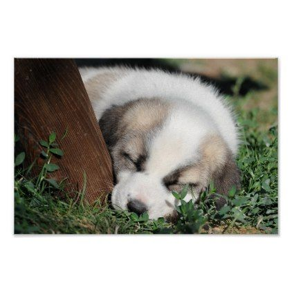 Dog Poster Dog Puppy Dogs Doggy Pup Hound Love Pet Best Friend