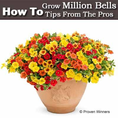 Tips On How To Grow Million Bells From The Pros