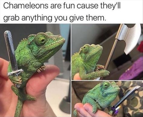 """That chameleon looks old and bitter about the war.  Like """"another day, another castle full of NPCs for me to have to murder..."""""""