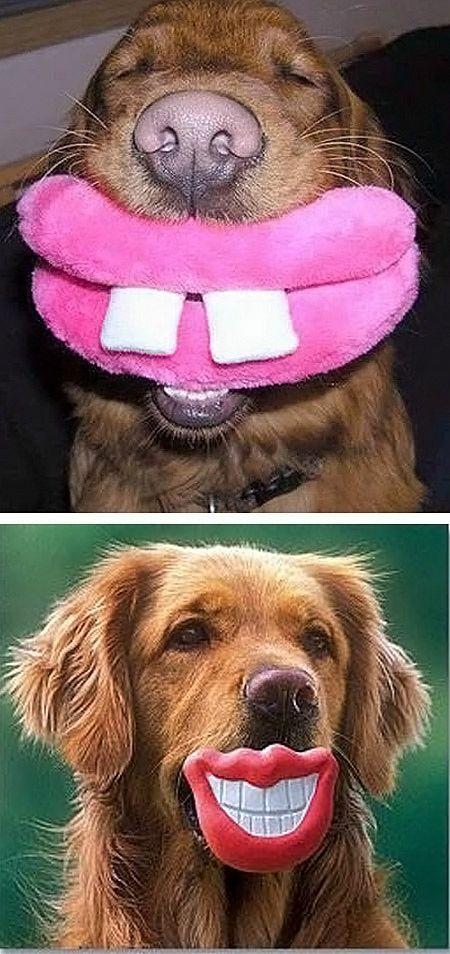Smile Lol Lips Cute Dog Toys Best Dog Toys Cute Animals
