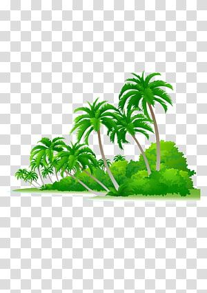 Green Coconut Trees Arecaceae Euclidean Tree Illustration Palm Beach Transparent Background Png Clipart Tree Illustration Palm Tree Images Palm Tree Png