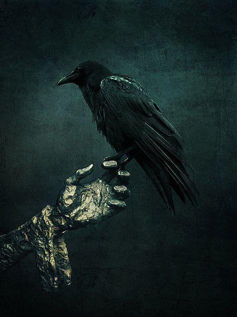 Raven, Crow, et Corbacs  C4b7c72d16cf26799fbcc389bf6b92c1--blackbird-singing-crows-ravens
