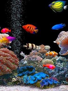 Aquarium Mobile Phone Wallpapers 3d Animation Wallpaper Free Animated Wallpaper Fish Wallpaper
