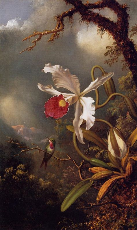 Image result for Amethyst Hummingbird with a White Orchid by Martin Johnson Heade