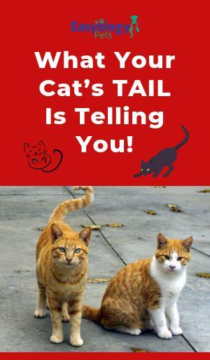 Pin On Easyology Pets Blog