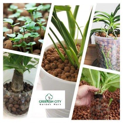 Hydroponic System Gardenmart4u Com Malaysia Online Garden Center In 2020 Hydroponics System Hydroponics Compost Soil