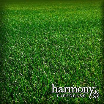 Harmony 500 Sq Ft Bluegrass Sod 1 Pallet Green To Blue Grass