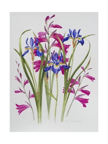 Beautiful Iris Flower Watercolor Women/'s Tee Image by Shutterstock