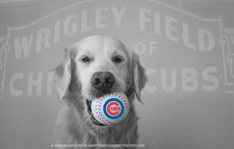 ... baseball and the chicago cubs good luck to the chicago cubs # gocubs