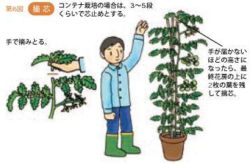 トマトの育て方 植え付けと支柱 暇人主婦の家庭菜園 トマトの栽培