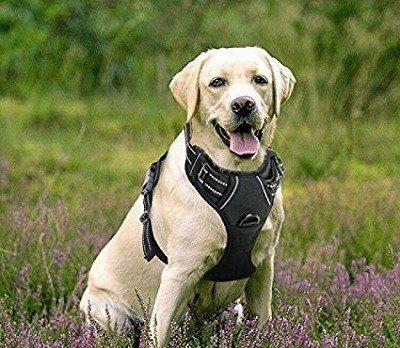Top 3 Best Dog Harness For Running In 2020 En 2020 Harnais Chien Chien Harnais