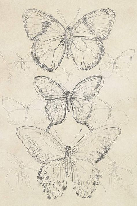 art sketchbook Vintage Butterfly Sketch I Canvas Artwork by June Erica Vess Art Sketches Art art sketches artwork Butterfly Canvas Erica June sketch sketchbook Vess Vintage Cool Art Drawings, Pencil Art Drawings, Art Drawings Sketches, Tattoo Drawings, Tattoo Sketches, Fairy Drawings, Drawing Ideas, Sketch Tattoo Design, Pencil Drawing Tutorials