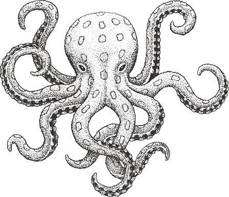 Blue Ringed Octopus Classic Drawn Ink Illustration Isolated On Octopus Drawing Ink Illustrations Octopus Sketch