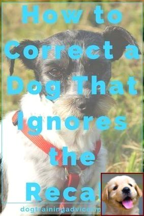 House Training Your Puppy Video And Clicker Training For Dogs