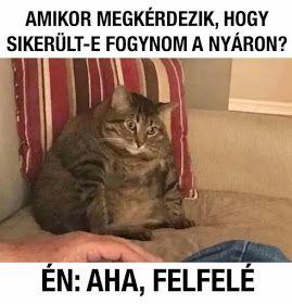 fogyókúra mém)