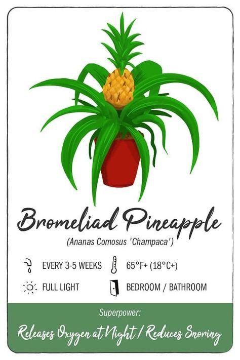 Pineapple Aloe Grow Kit