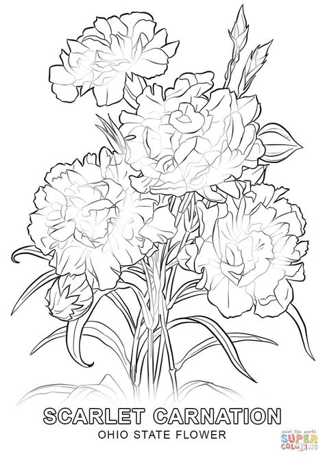 Ohio State Flower Coloring Page Free Printable Coloring Flower