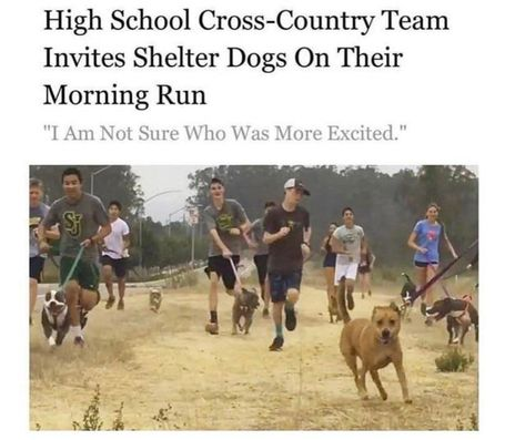 "wholesome meme - Cani cross - High School Cross-Country Team Invites Shelter Dogs On Their Morning Run ""I Am Not Sure Who Was More Excited. Cross Country Memes, High School Cross Country, Country Quotes, Animal Memes, Funny Animals, Memes Of The Day, Morning Running, Dog Memes, Funny Memes"