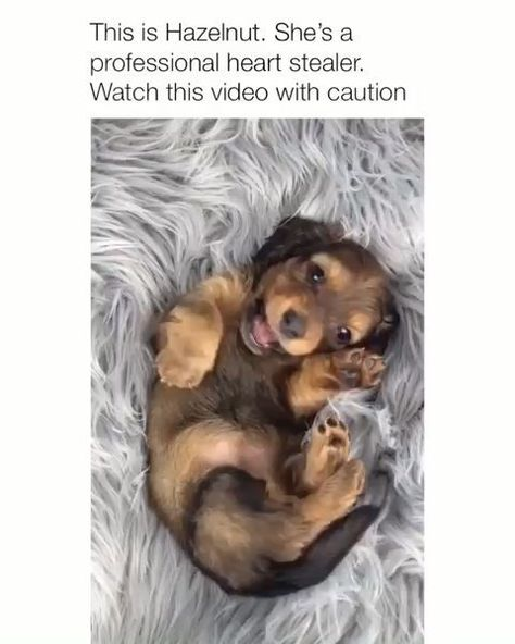 Animals, Cute animals, Cute baby animals, Dogs, Cute animal videos, Cute animal pictures - TAKE MY HEART IDC -  #Animals