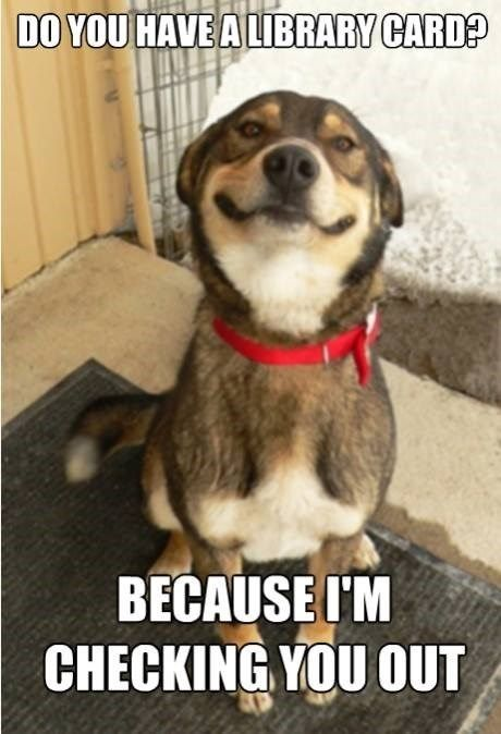 Over 65 Unforgettable Dog Memes Hilarious Pictures Unleashed Cute Funny Dogs Dog Memes Animal Humor Dog