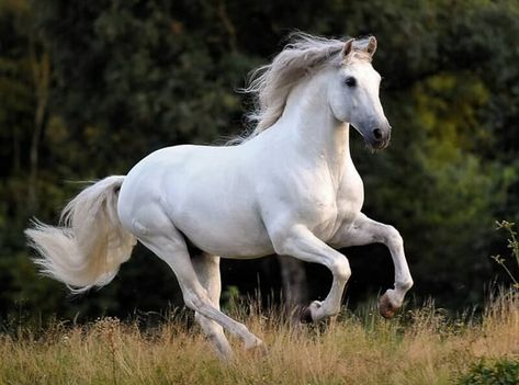 100 Good Names for White Horses