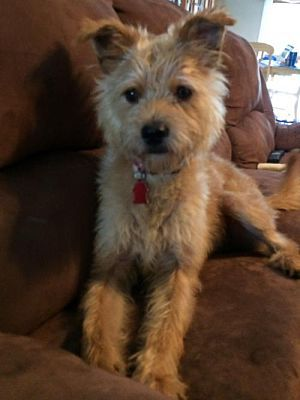 Royal Palm Beach Fl Terrier Unknown Type Medium Meet Benji
